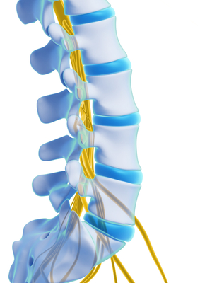 Recovery from a spinal cord