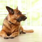 Specific Laws for Dog Breeds