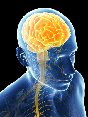 Road to recovery for people with injury to the brain