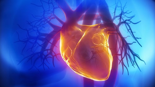 Arteries Heart Wrong Positions At Birth
