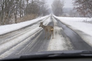 Accident With Deer