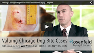Getting Maximum Compensation For Your Dog Bite