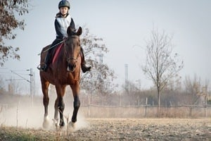"Liability Under ""The Equine Activity Liability Act"""