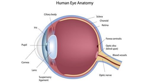 Eye Nerve Loses Blood Blindness