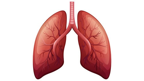 Bronchiole Disease Interferes Breathing