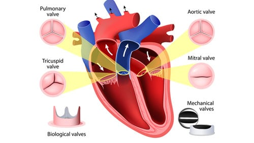 Blood Flow Decrease Heart