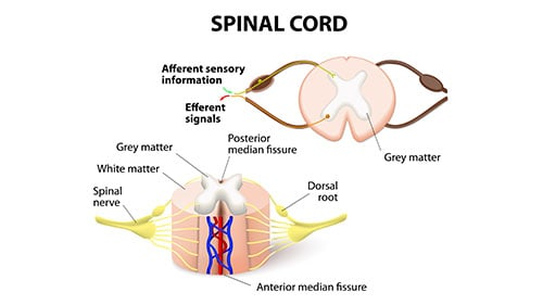 How Much Have Other Victims Of Spinal Cord Injuries Recovered?