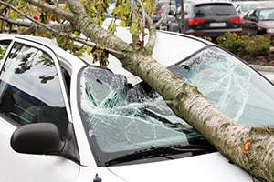 Tree Falling Accidents